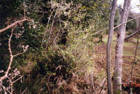northFk-159-before.fence-98