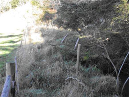 twomile-2-fence.plant-03