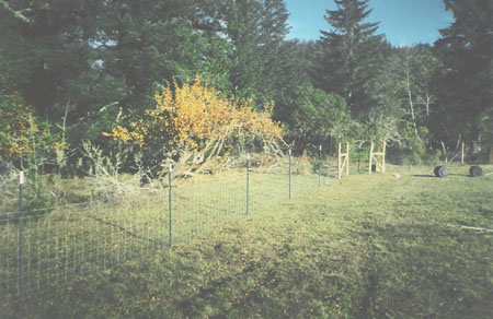 yellow-197-fence.after-00