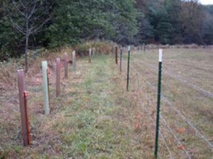 eastFk-10-fence.plant-02